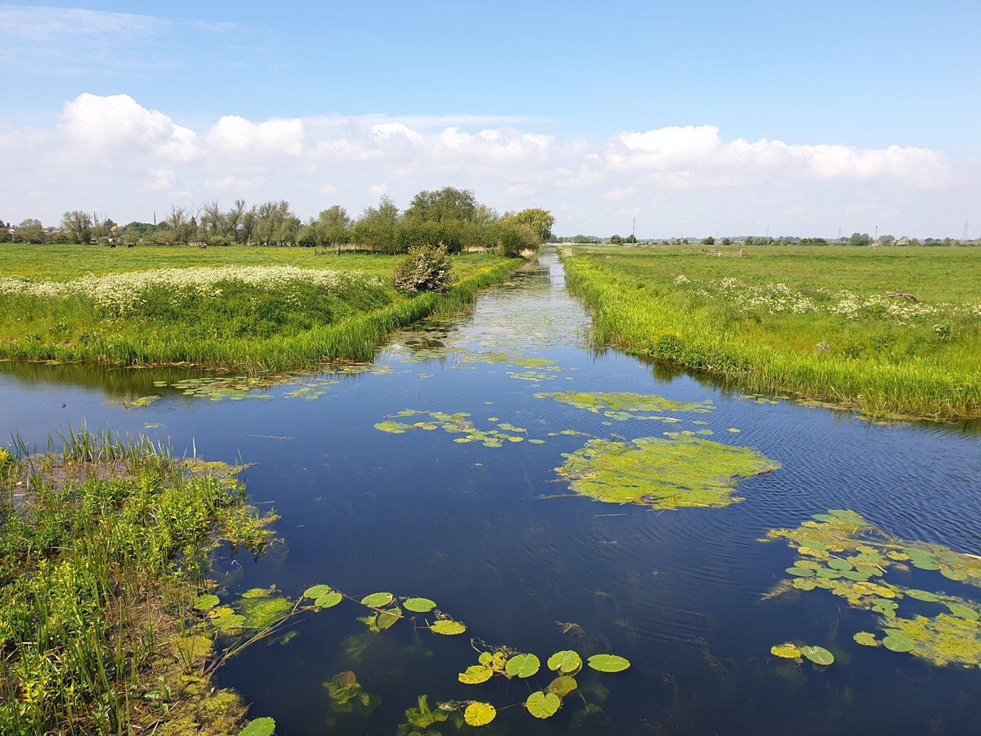 Hereward Way dyke ditch river with water lillies