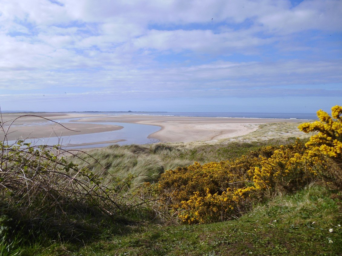 budle bay northumberland, beach, gorse, tide going out